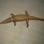 Le crocodile de Oiron